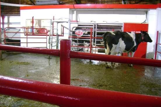 Grant's Brook Farms' Lely Astronaut A3 robotic milking system