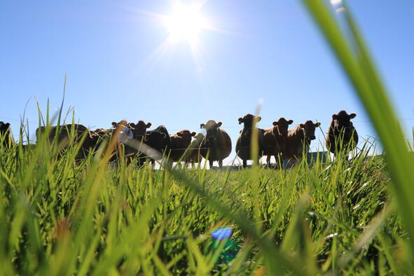 Transition to grazing may not be easy for your herd. Make it easier with the Lely Grazeway