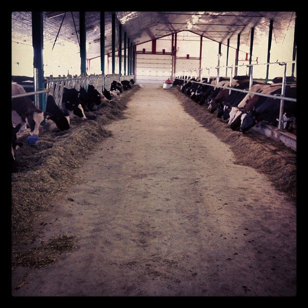 Dandydale Farms in Vankleek Hill, Ontario, Canada.  Submitted by: Hayden Dandy