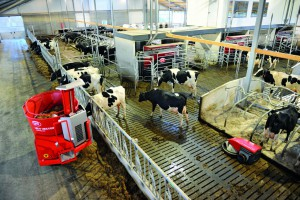 Dairy cows eating from Lely Vector automatic feeder