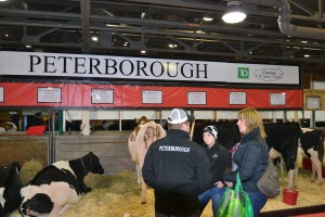 4-H supporters checking out dairy cows.