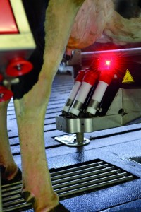 Lely Astronaut A4 uses laser technology to correctly attach to the cow