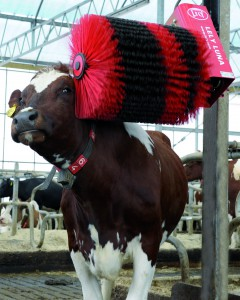 Lely Luna automatic cow brush