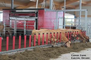 Carnor Farms Dairy Barn