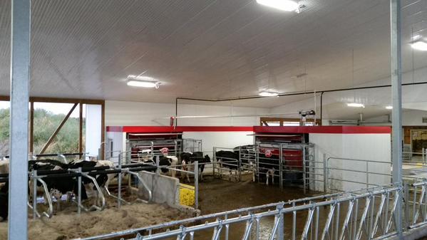 Lely robotic milking startup