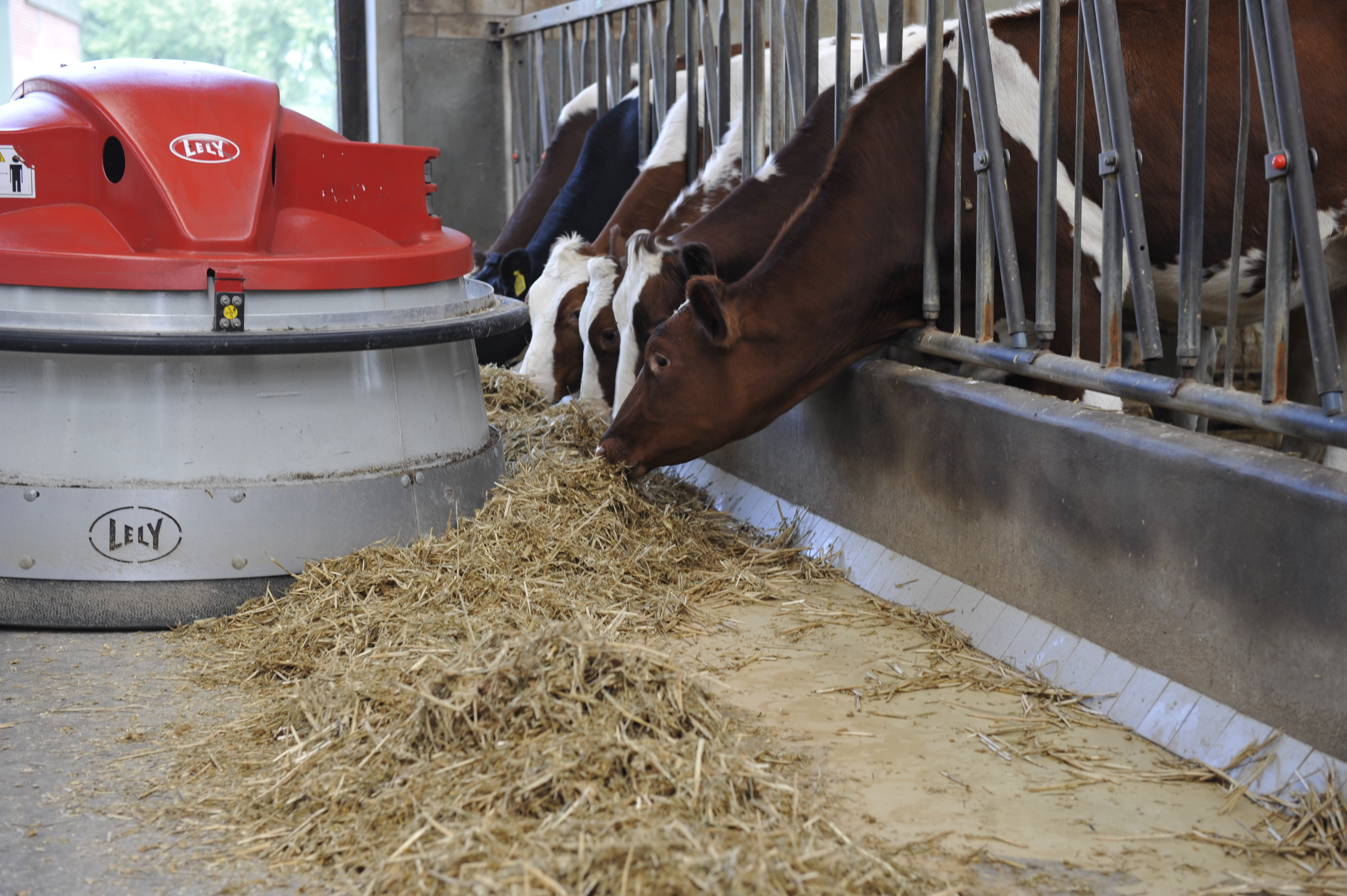 The Lely Juno automatic feed pusher keeps fresh feed in front of your cows 24/7