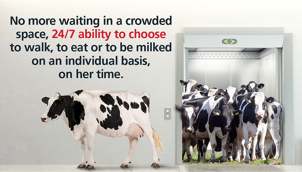 Free cow traffic has proven to add, on average, 2.2 lbs of milk per cow per day more than guided or forced cow traffic.