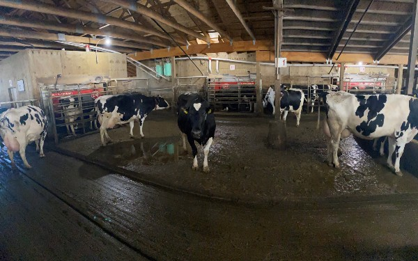 Lely Astronaut robotic milking systems enhance Pattison Dairy