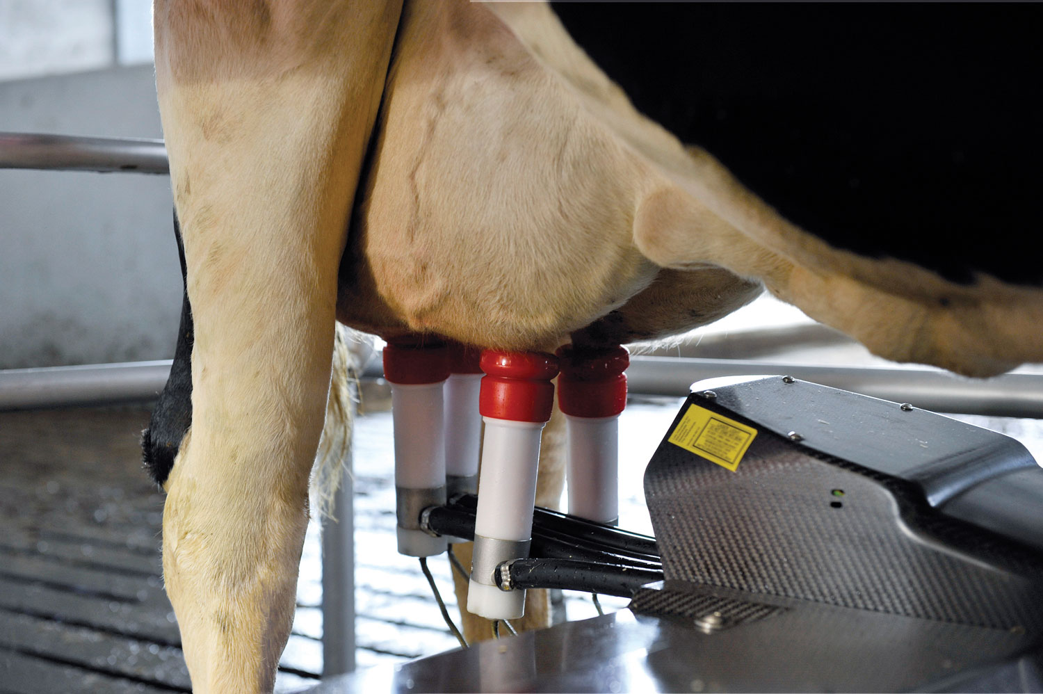 Udder-health_arm-close-up