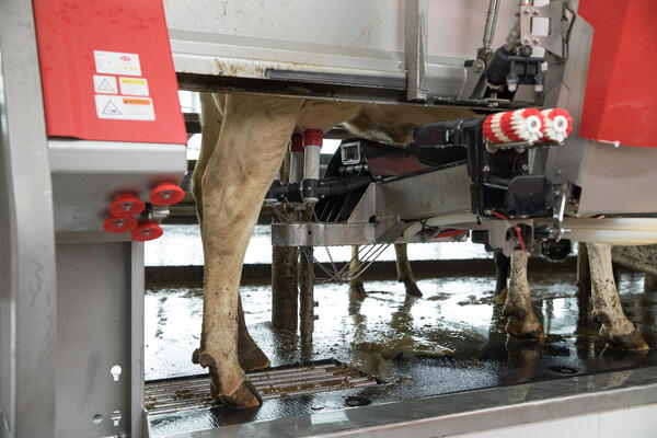 Lely Astronaut A5 robotic milking system