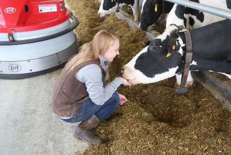 Flory family member checks on dairy cows being fed by Juno automatic feed pusher.