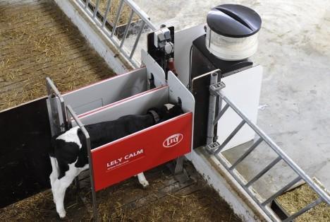 Lely Calm automatic calf feeder