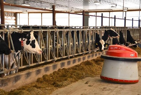 Lely Luna automatic feeder