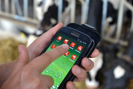 Dairy producer using the Lely T4C management system on a mobile device for information on his dairy farm.