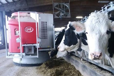 Malm's Rolling Acres dairy cows eating from a Lely Vector automatic feeding system