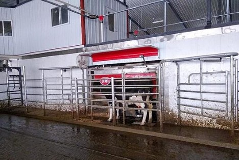 Olson Dairy Farms' dairy cow using Lely Astronaut A5 robotic milking systems