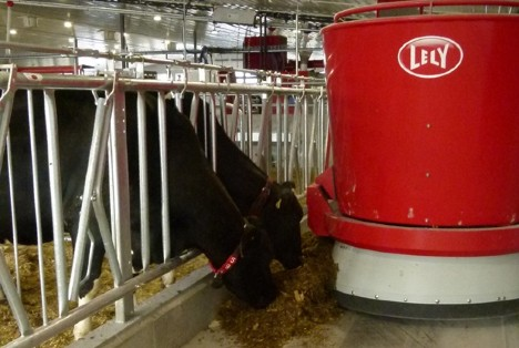 Sunny Glade Farm dairy cows eat from Lely robot.