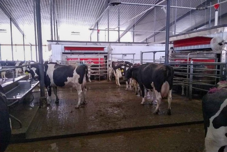 Lely Astronaut A5 robotic milking systems